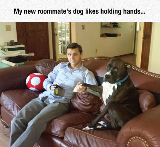 funny-dog-holding-hands-couch