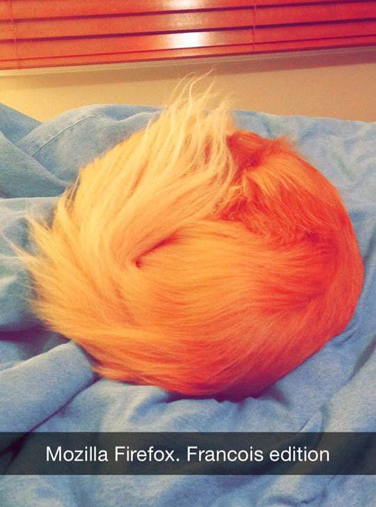 funny-dog-tail-bed-Firefox-logo