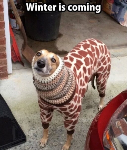 funny-dog-winter-is-coming-dog