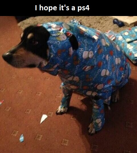 funny dog wrapping paper dog