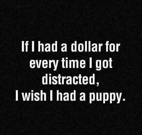 funny-dollar-distruction-puppy