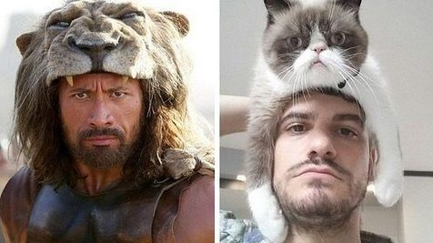 funny-dwayne-johnson-cat