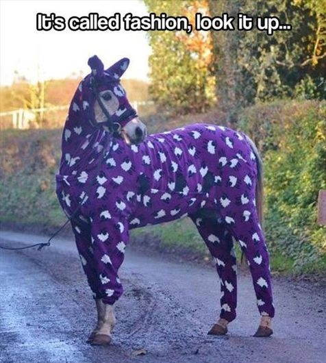 funny-horse-fashion