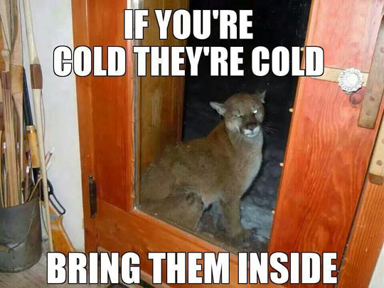 funny-mountain-lion-cold-door-outside