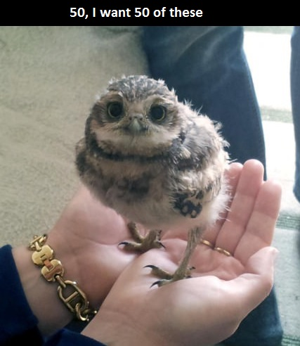 funny-owl-cute-little