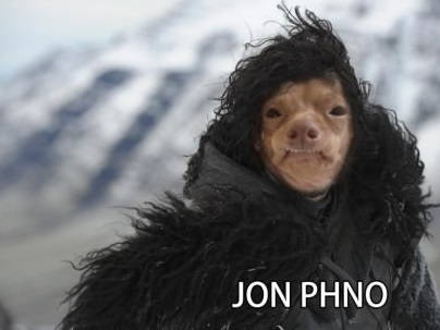 Drôles d'images Funny-phteven-jon-snow-dog