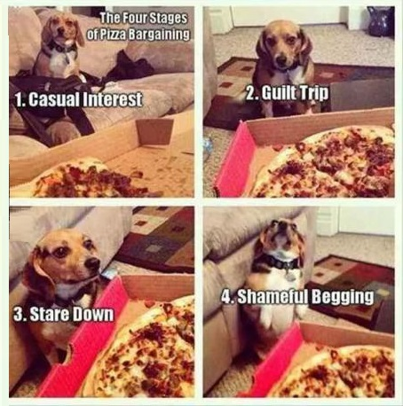 funny-pizza-bargaining-stages-dog