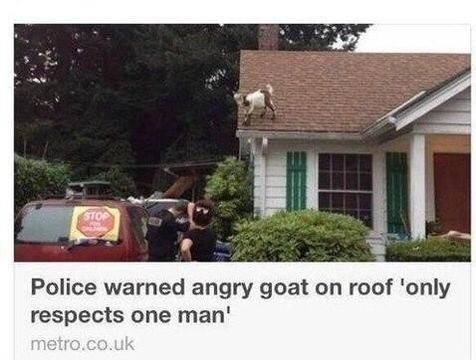funny-police-goat-respect