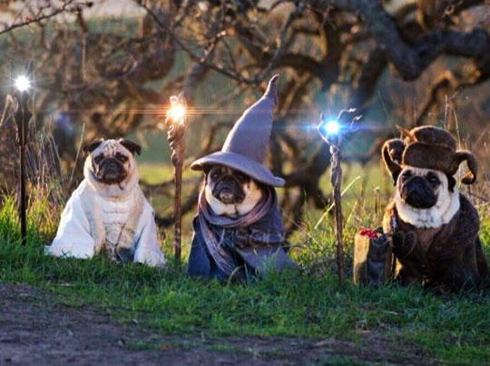 funny-pugs-dogs-cosplay-LotR