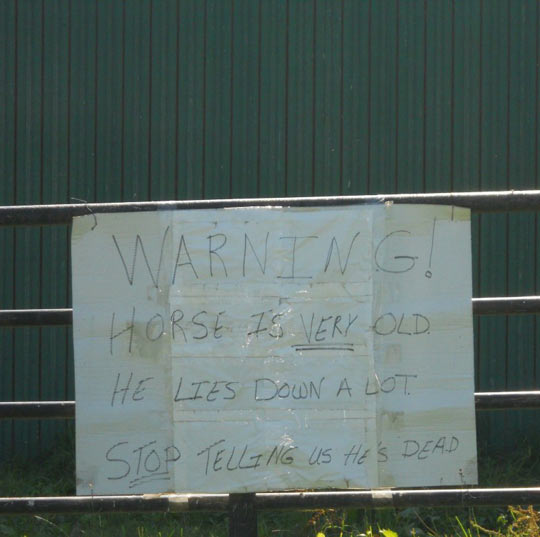 funny-sign-warning-horse-lies-down