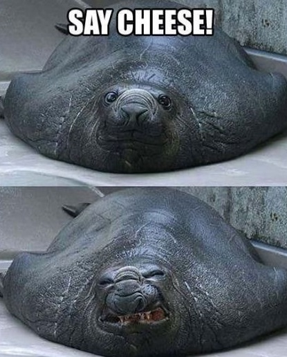 funny-smile-seal-cheese