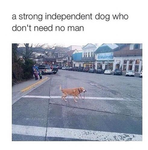 funny-strong-indepenent-dog