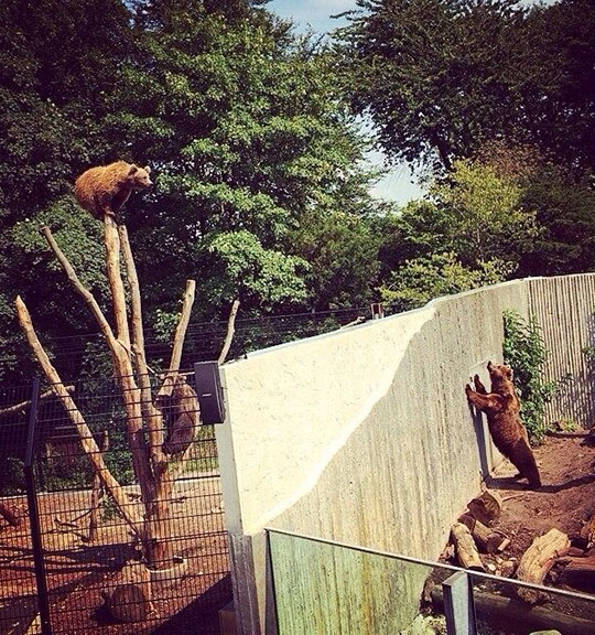 cute-bear-climbing-tree-wall-couple