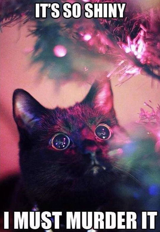cute-cat-looking-light-Christmas-tree