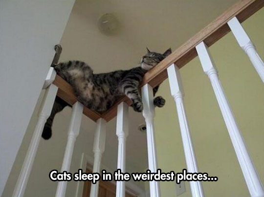 cute-cat-sleeping-stairs