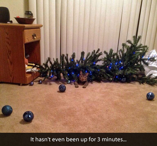 cute-cat-trapped-under-Christmas-tree