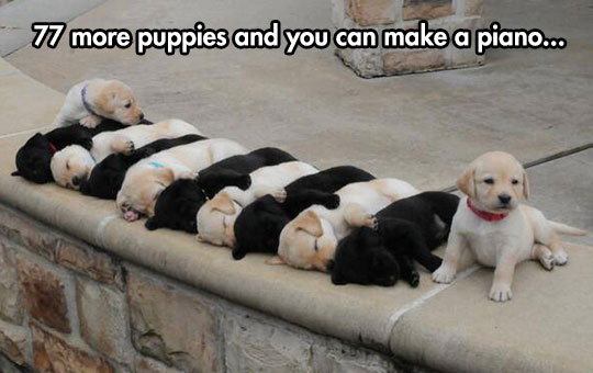 cute-puppies-sleeping-colors-cool