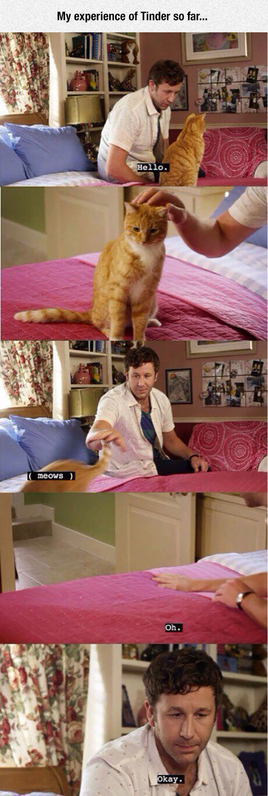 funny-Chris-ODowd-cat-pink-bed