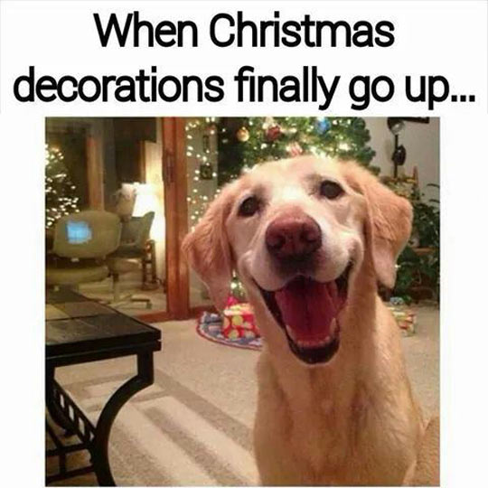 funny-Christmas-decoration-dog-happiness