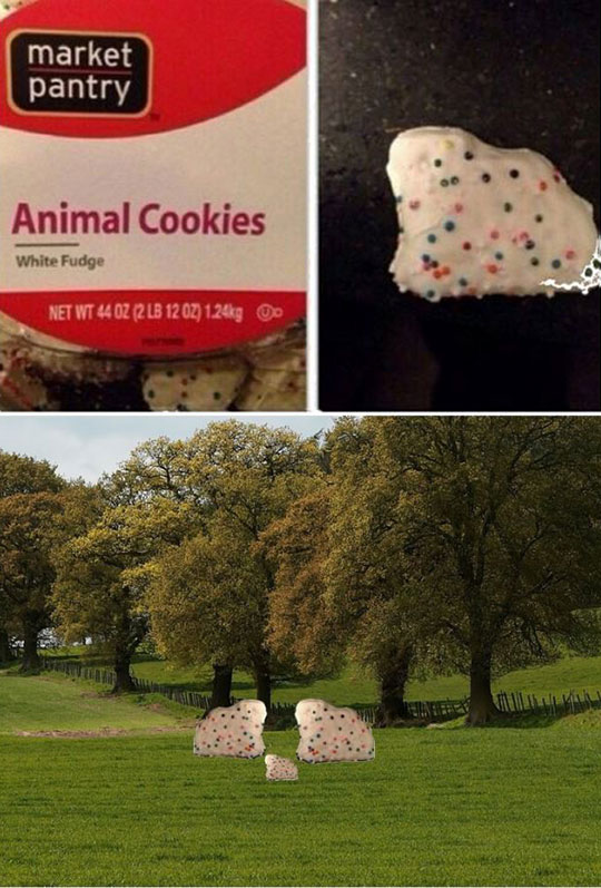 funny-animal-cookies-environment-shape