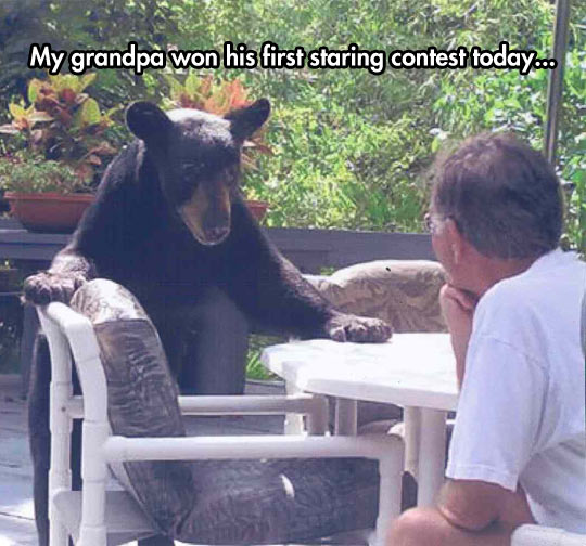 funny-bear-deck-grandfather-staring