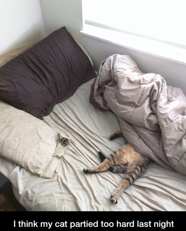 funny-bed-cat-party-hard