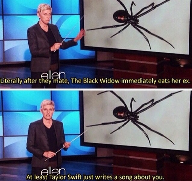 funny-black-widow-spider-taylor-swift