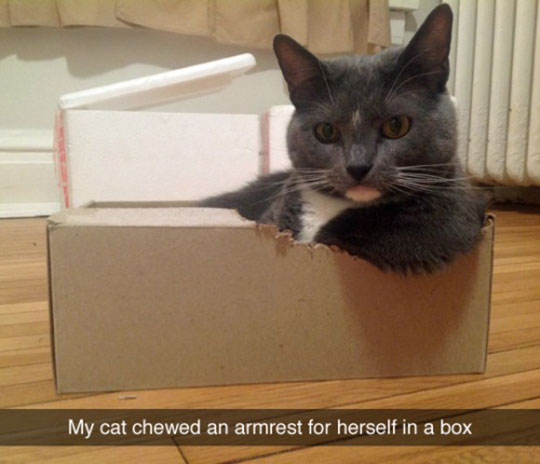funny-cat-armrest-chewed-box