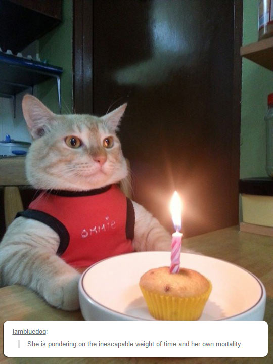 funny-cat-candle-cupcake-tshirt