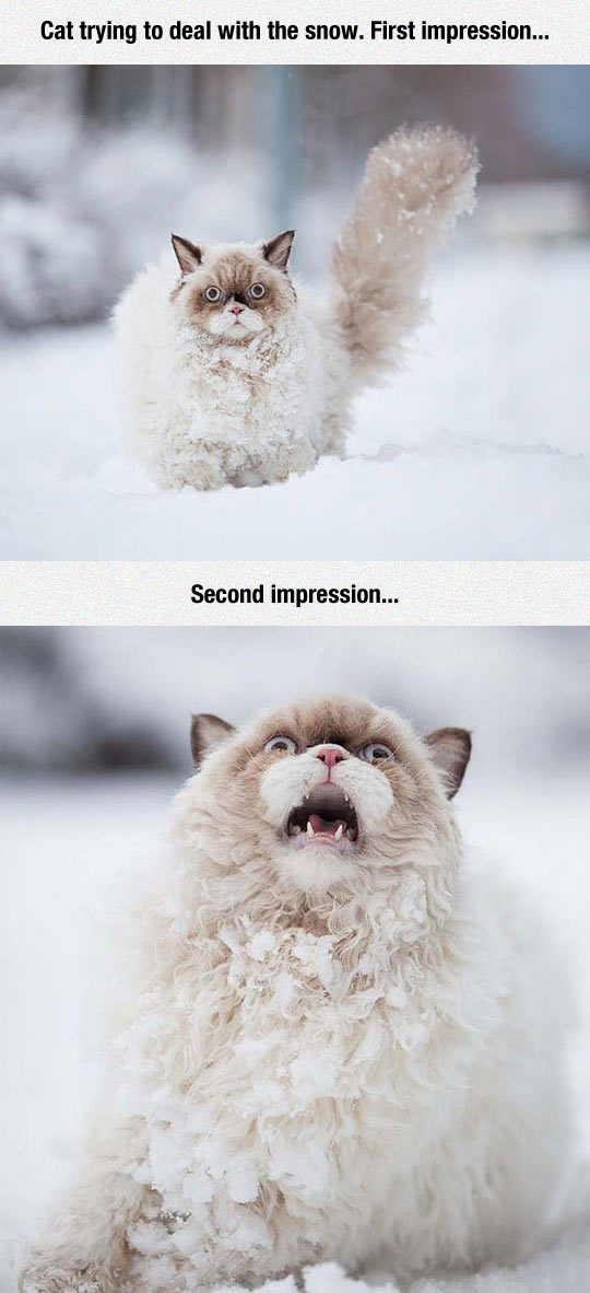 funny-cat-crying-snow-first-impression