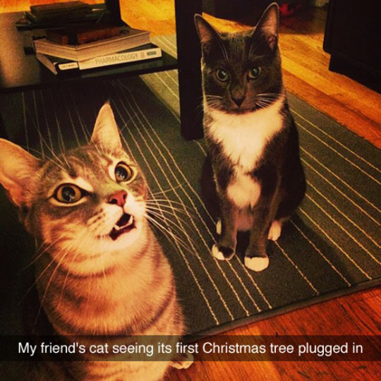 funny-cat-looking-Christmas-tree