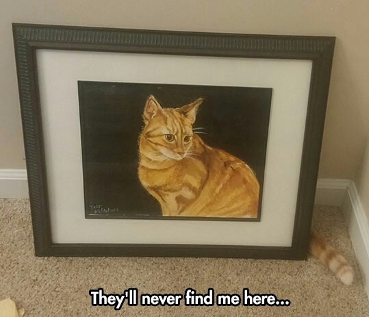 funny-cat-painting-tail