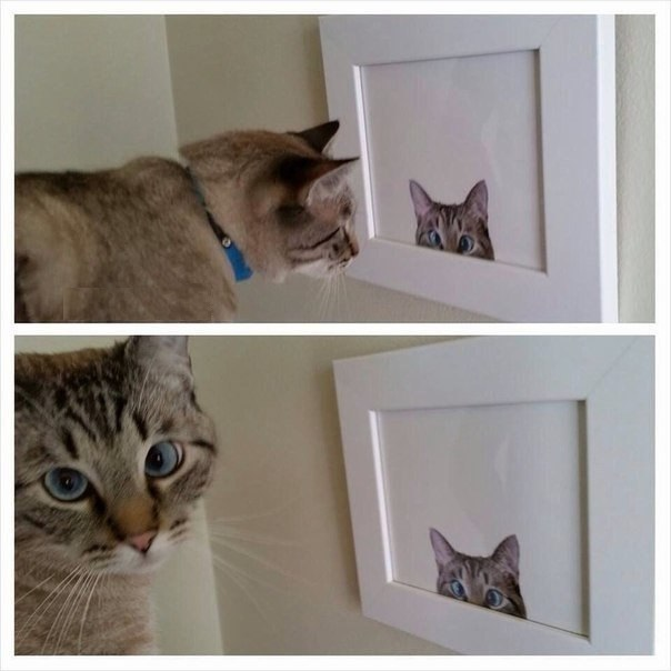 funny-cat-photo