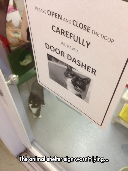 funny-cat-sign-animal-shelter-dasher