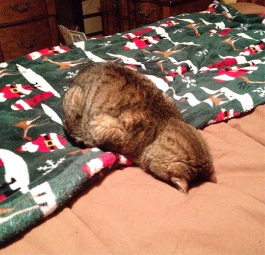 funny-cat-sleeping-bed-face