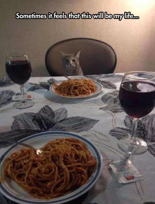 funny-cat-spaghetti-dinner-wine