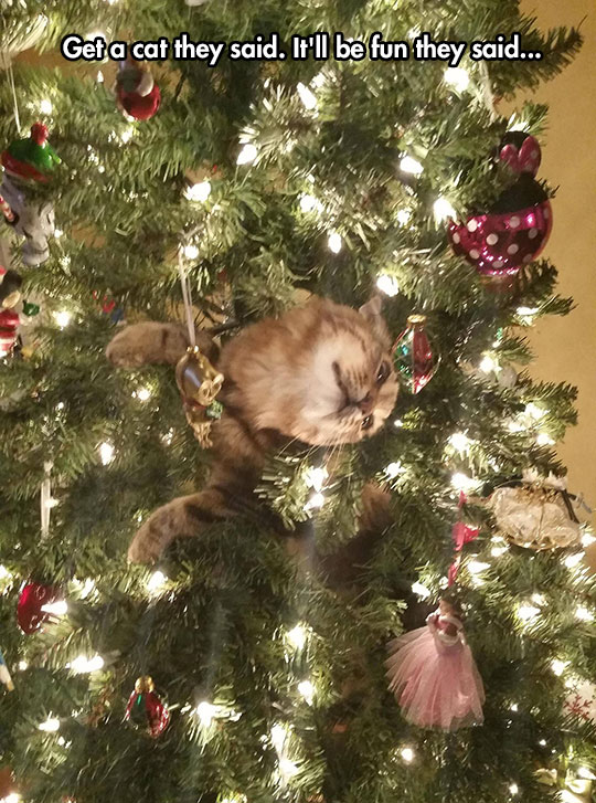 funny-cat-stuck-Christmas-tree