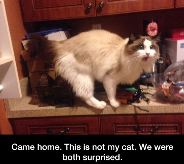funny-cat-surprise-home