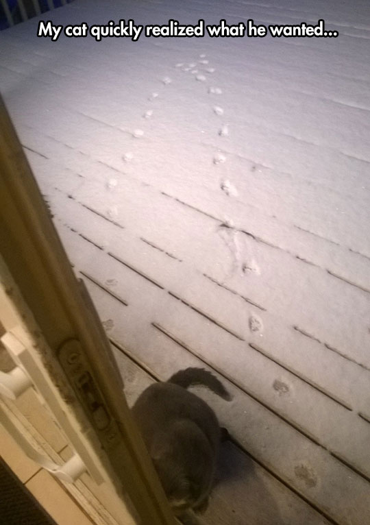 funny-cat-trails-snow-porch