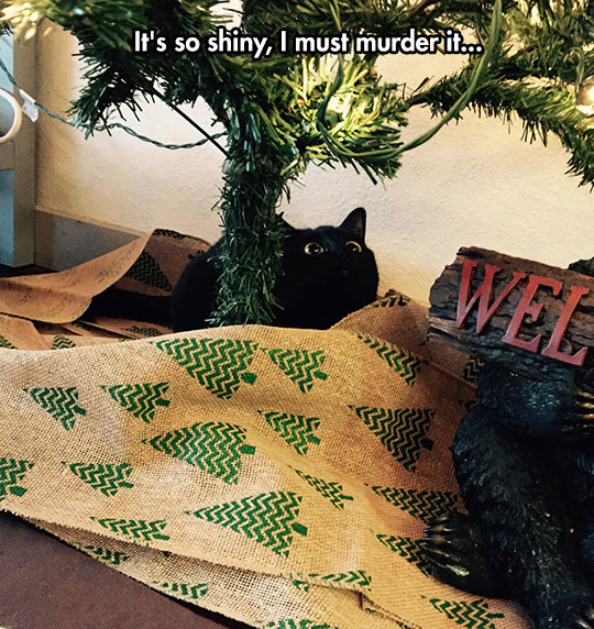 funny-cat-under-Christmas-tree