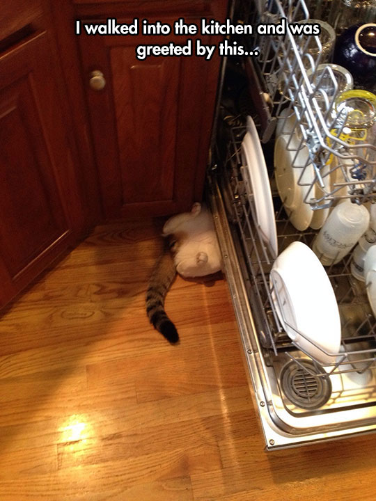 funny-cat-under-washing-machine