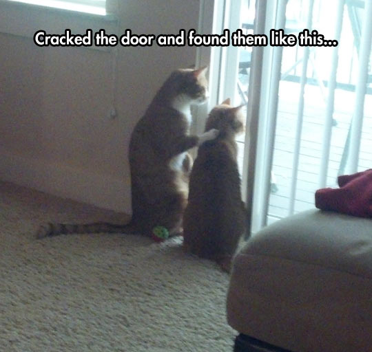 funny-cats-looking-trough-door-friendly