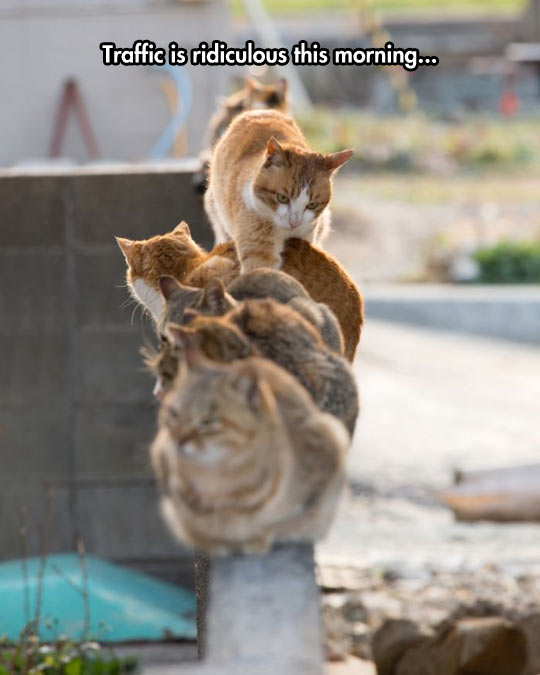 funny-cats-siting-wall-walk-trough