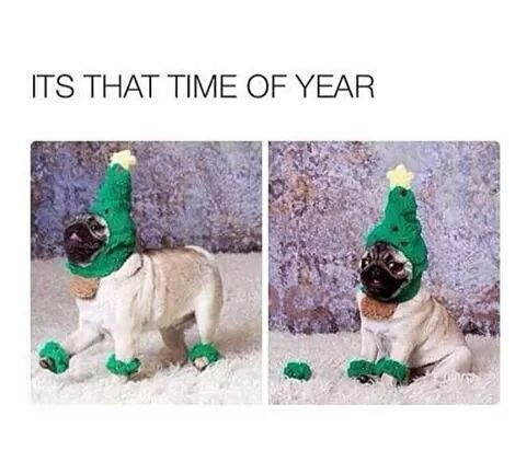 funny-christmas-time-puppy