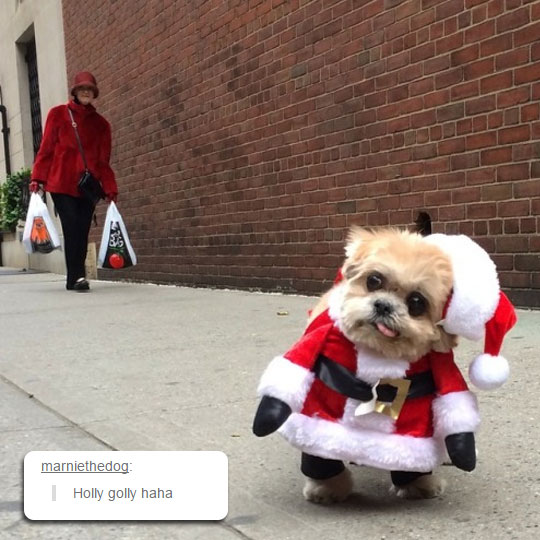 funny-dog-Santa-costume-tongue-out
