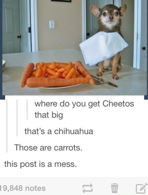 funny-dog-carrot-mess