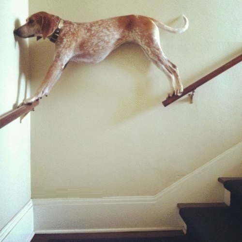 funny-dog-dont-ask-why
