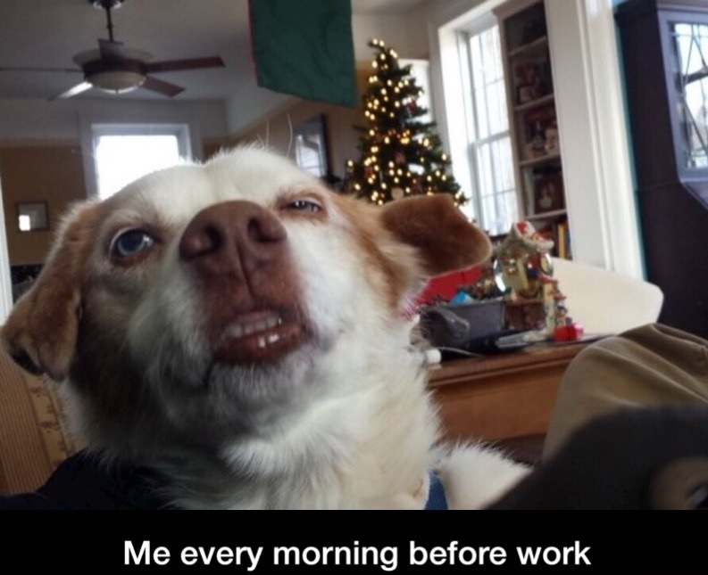 funny-dog-face-morning