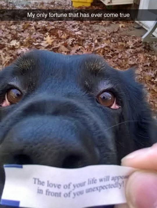 funny-dog-fortune-cookie-eyes
