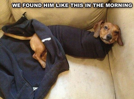 funny-dog-sleepy-clothes